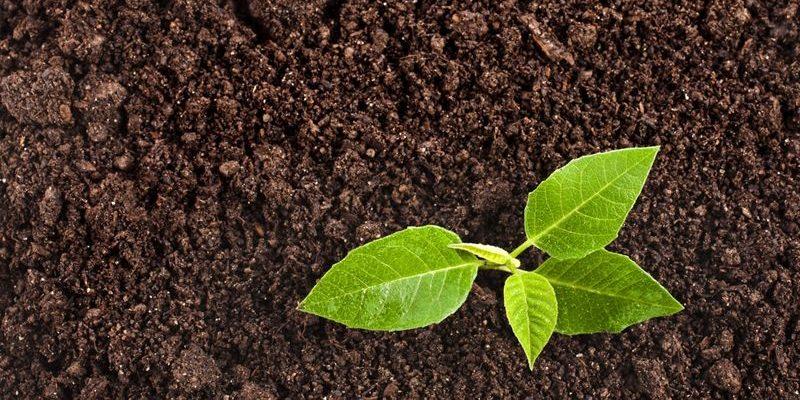 Виды растительного грунта